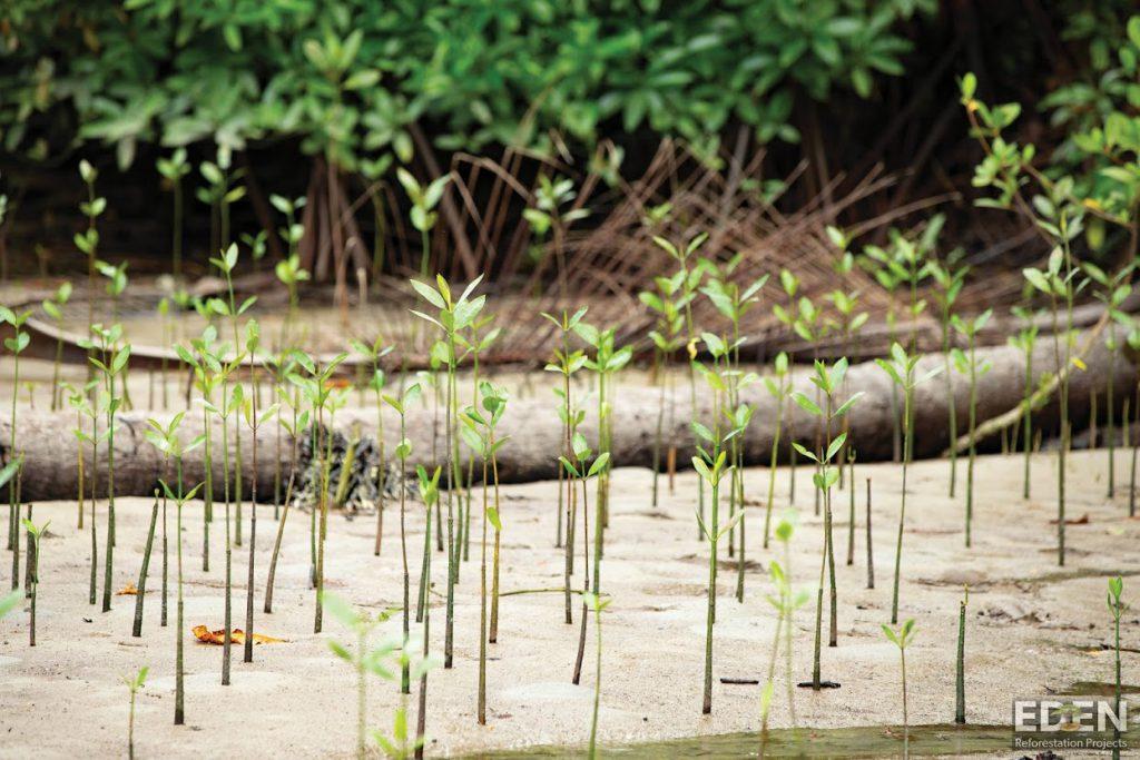 Eden Reforestation, People Insight